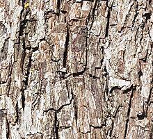 Wood 2 by Jan Vinclair