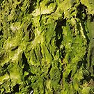 Wood 3 by Jan Vinclair