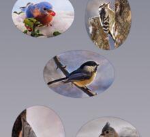 Bird Lover 2 Sticker