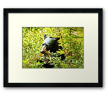 Hungry again Framed Print