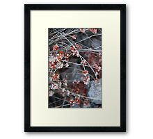 Dry flower blossoms. Chiricahua Mountains, Arizona, USA. Framed Print