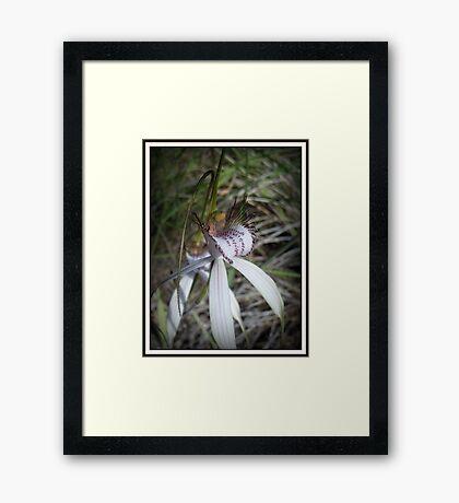 Aussie Beauty Framed Print