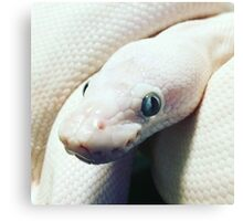 BEL BALL PYTHON Canvas Print