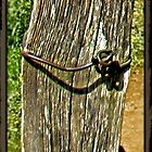 """Old Fence Post and Rusted Wire""... prints and products by © Bob Hall"
