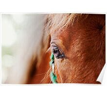 Miniature Brown Horse Filly Eye Golden Mane Teal Bridle Poster