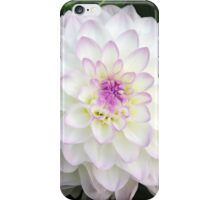White Dahlia Beauty iPhone Case/Skin