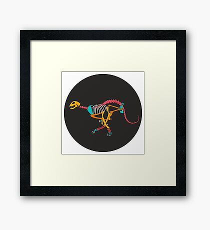 Wildcat Skeleton Framed Print