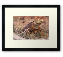 Galapagos Boss - Limited Edition Print 1/10 Framed Print
