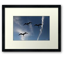 Beauty of Flight - Limited Edition Print 1/10 Framed Print