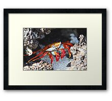 Galapagos Sally - Limited Edition Print 1/10 Framed Print