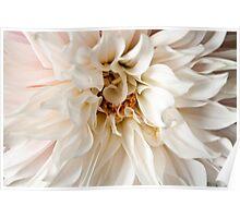 Pink Dahlia Blossom Flower Background Poster