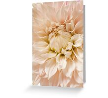 Pink Dahlia Blossom Flower Background Greeting Card