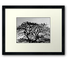 The Scavengers - Limited Edition Print 1/10 Framed Print
