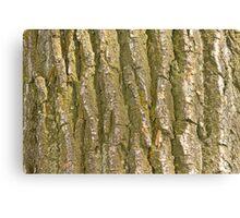 Cottonwood Tree Bark Texture Canvas Print