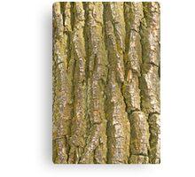 Tree Bark Texture Vertical Canvas Print