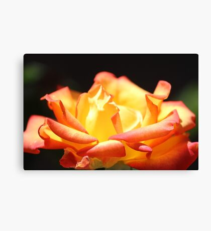 Rose For My Mum Canvas Print