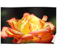 Rose For My Mum Poster