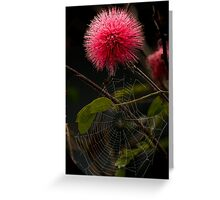 Mimosa pudica Greeting Card