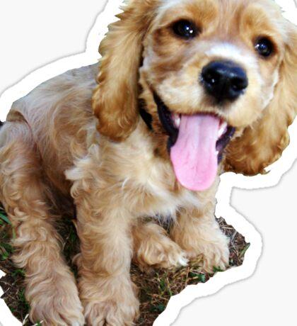 Spaniel Pup Sticker