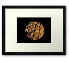 Full moon though the branches Framed Print