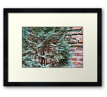 Green and Red - Slender Cypress Branches Over Rough Roman Brick Wall Framed Print