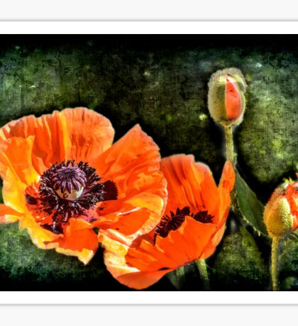 Oriental Poppies family Sticker