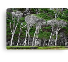 Coastal Tea Trees Canvas Print