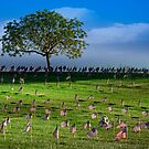 Some Gave All by CarolM