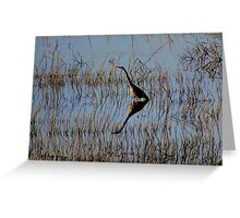 Blue Heron in Late Day Sunshine Greeting Card