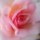 Fragrant Dream by Lozzar Flowers & Art