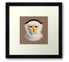 Capuchin Monkey Framed Print