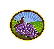 Grapes Vineyard Farm Oval Woodcut Photographic Print