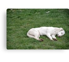 Sleeping White Canvas Print