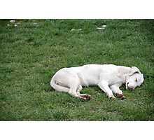Sleeping White Photographic Print