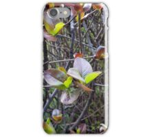 leaflets on twigs iPhone Case/Skin