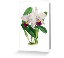 TIR-Flower-Orchid-2 Greeting Card