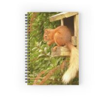 Red Squirrel Spiral Notebook