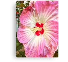 Orchid in Pink and White Canvas Print