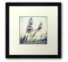 Water Reeds 2 Framed Print
