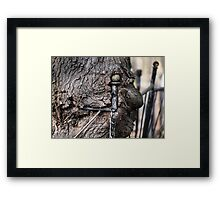 fantastic  freakish eye   Framed Print