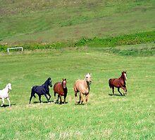 Laura's Horses by Annlynn Ward