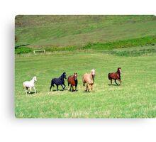 Laura's Horses Canvas Print