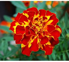 Red and Yellow Flower Photographic Print