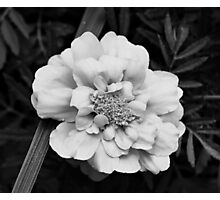 Black & White Flower Photographic Print
