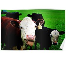Funny - silly cows (2014) Poster
