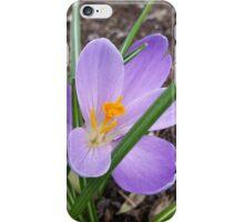 Lavender Crocus iPhone Case/Skin