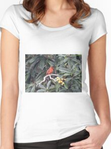 Cardinal in a Fruit Tree Women's Fitted Scoop T-Shirt