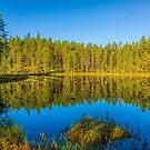 Summer morning silence by Veikko  Suikkanen
