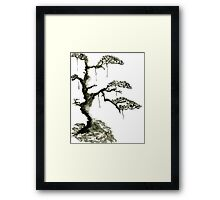Chinese pine, a symbol of longevity Framed Print