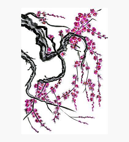 Pink flowers of sakura Photographic Print